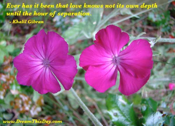 quotes on death of a loved one. Quotes about Death of a Loved